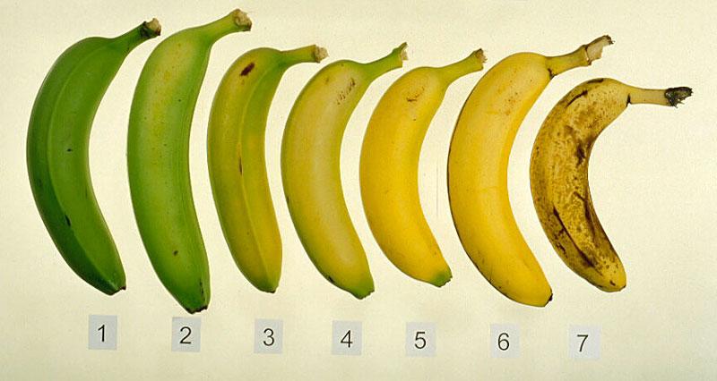 banana ripening chart