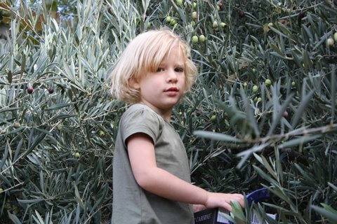Jasmine picking olives in olive!