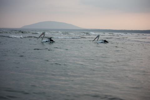Nice view of pelicans and 7 mile beach, Gerroa