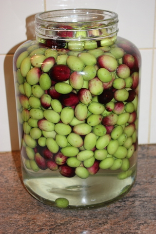 My olives in brine - they need to stay like this for 6 months