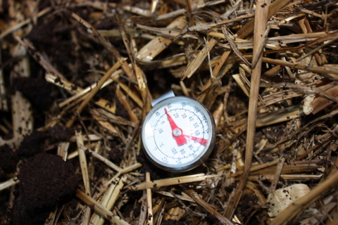 The compost temperature today - Monday 9th August is a cool 16 degrees C