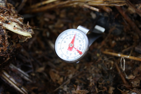 Day 6 compost - Temperature 22 degrees Celcius